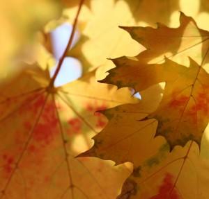 Septiembre es un momento momento para replantearnos donde domiciliar nuestra nómina